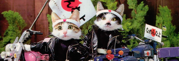 Detail of the cover of 'Nammenayo Cats' (Tsuda 1981)